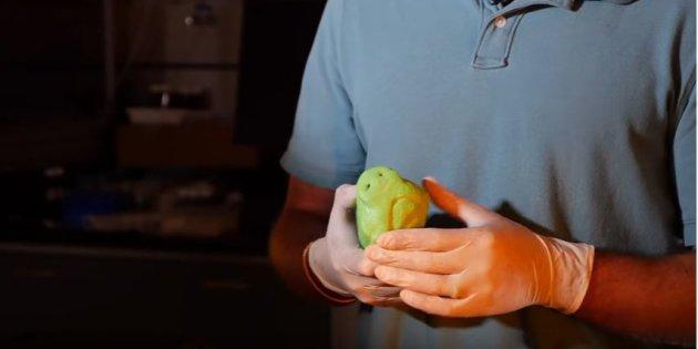 Truffe de chienne imprimée en 3D